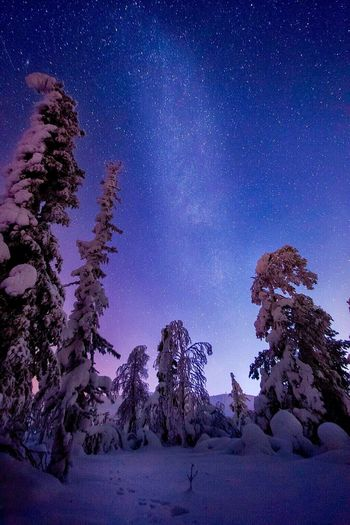 Milky Way Winter Night Star - Space Snow Astronomy Space Galaxy Tree Sky Cold Temperature Landscape Constellation No People Scenics Beauty In Nature Nature Outdoors Lapland Finland