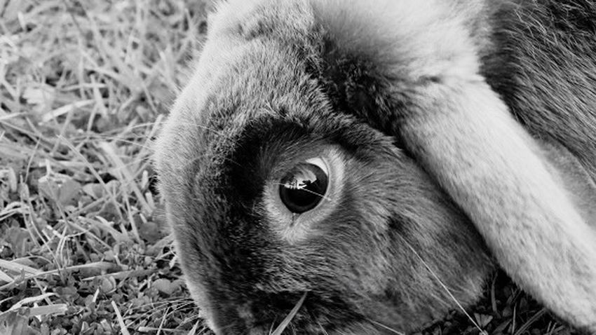 Check This Out Hello World Love Therapie❤️ EyeEm Gallery Beauty In Nature Lily May Art From My Point Of View May Lily May Parker Belgium Lily Own Style  For Once Nature Beautiful Lily Style ❤ Rabbit ❤️ Rabbits Rabbits 🐇
