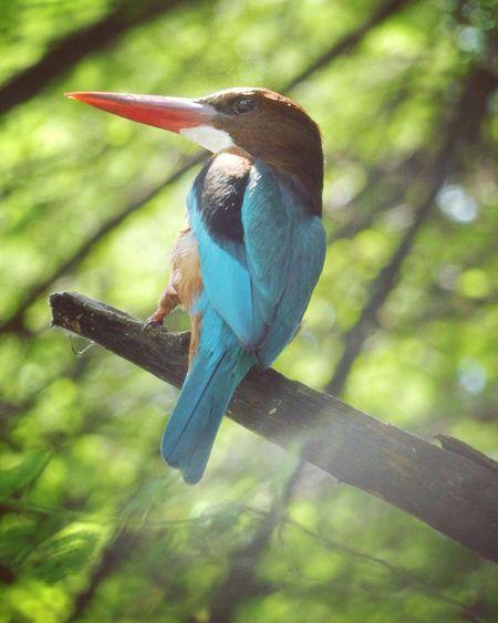 Kingfisher Bird At Tholbirdsanctuary EyeEm Best Shots EyeEmBestPics Light And Shadow Nikonphotography Manual Focus With Awesome_shots