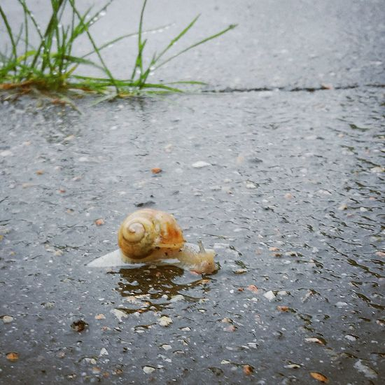 So sweet snail 🐌🐌🐌 Snail🐌 Snail ❤ Hanging Out Small_world Cute Baby Cute Pets Walking Around Rainy Days On The Road Hello World