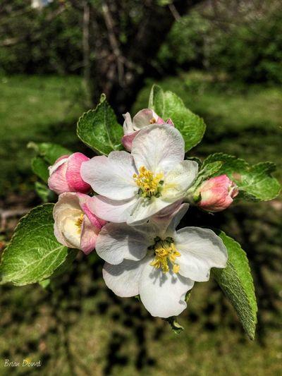 Happy Easter weekend my friends Flower Apple Springtime Outdoors Tree Illinois