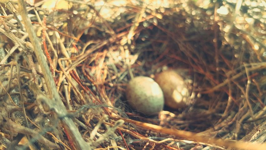 Taking Photos Birdeggs Birds Nest Bird Eggs Photography
