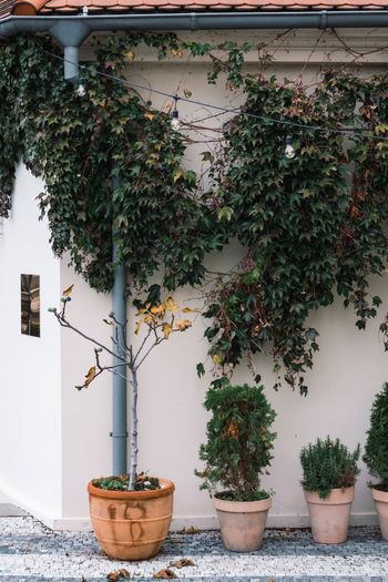 Potted plants and trees outside house