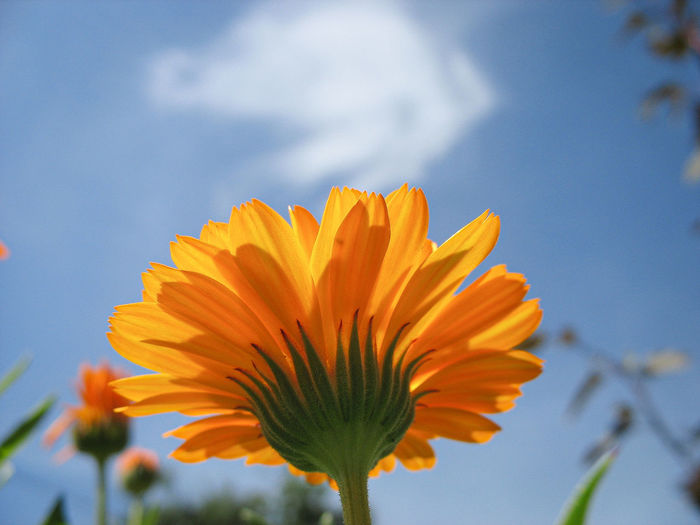 Low angle view of orange flower against sky