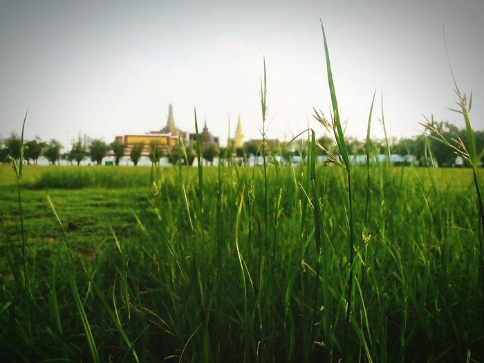 นี้แหละประเทศไทย A Day In Thailand นี้สิเมืองไทย Betefull Taking Photos สนามหลวง😉😉😉😉