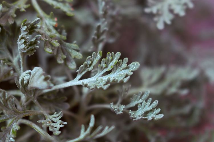 Heed Leaf Macro Green Snowflake Tree Snow Winter Cold Temperature Ice Branch Close-up Plant Frost Plant Part Botanical Garden Plant Life Leaf Vein Flowering Plant Leaves Focus Weather Condition Frozen Water