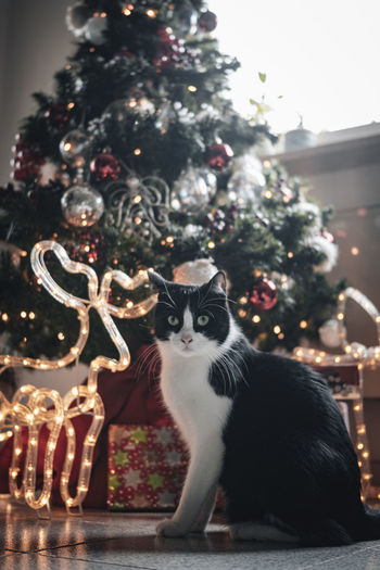Full frame shot of cat with christmas tree