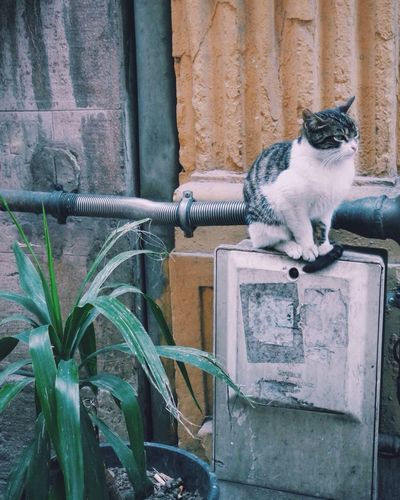 Cat Enjoying Life Cat Lovers Life In Colors Galata Tower Cats Of EyeEm Beautiful Nature Springtime There Is Life Everywhere Followme Street Photography
