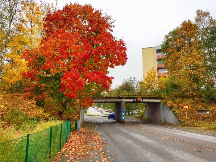 Autumn Flower Tree Nature Change Built Structure Architecture Growth Building Exterior Outdoors Beauty In Nature Horizontal No People Day Kindergarten Autumn Collection Autumn Leaves Autumn Colors Autumn🍁🍁🍁 Vibrant Color Fallen Leaf Love Is In The Air Bridge