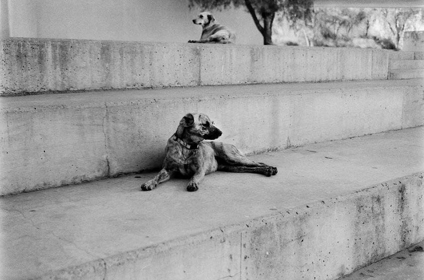 Perros en la UAI Trix Tmax Kodak Film Dog Pets One Animal Animal Themes Domestic Animals Mammal Animal Outdoors No People Day The Street Photographer - 2018 EyeEm Awards