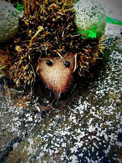 Hedgehog No