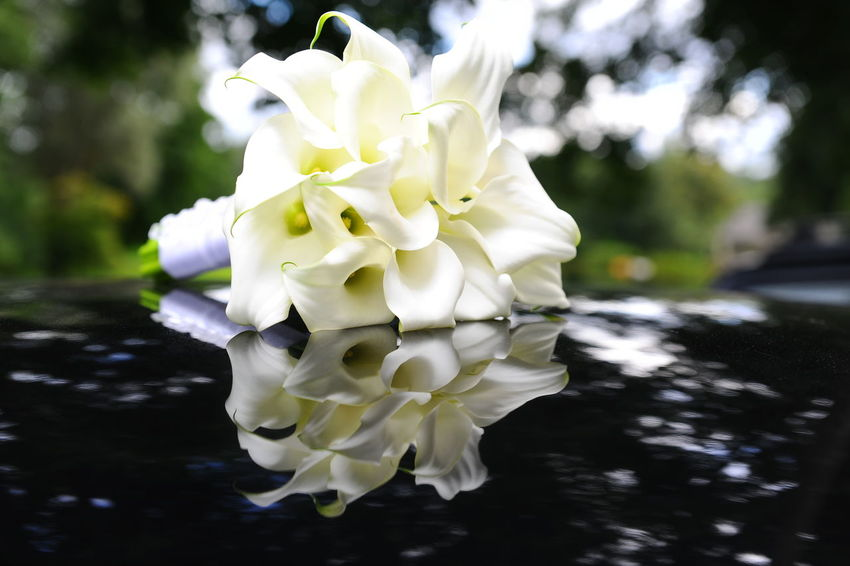 Beautiful calla lilies bouquet Beauty In Nature Bouquet Bridal Bouquet Bunch Of Flowers Calla Lilies Close-up Day Event Flower Arrangement Flowers Freshness Natural Nature No People Outdoors Outdoors Photograpghy  Petal Pure Reflection Romantic Sunny Wedding White Color