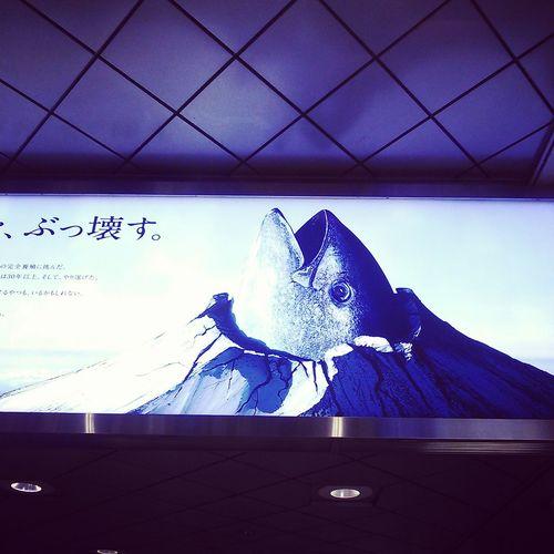 Mt.Fuji with Tuna Fujisan Tuna Fish Japanese Culture
