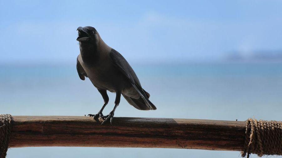 Bird perching on railing against sea