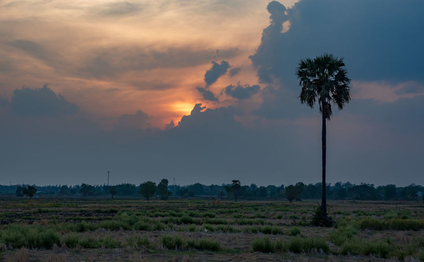 Rural scene at sunset Cloud - Sky Sky Sunset Landscape Field Plant Palm Tree Tranquil Scene Rural Scene Land Scenics - Nature Beauty In Nature Tranquility Idyllic Nature Environment Rice Field And Sugar Palm Tree Sugar Palm Tree Tree Coconut Palm Tree No People Tropical Climate Growth First Eyeem Photo