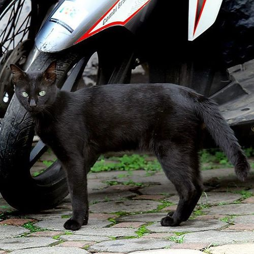 The nice black cat. Cat Animal Cool Nice Kucing Ucing Kucinghitam Ucinghideung Photooftheday