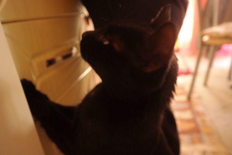 Kediciğim Catphotos CatPhoto🐱 Catphotography Catphoto Mylovecat Love Blackcatlove Blackcats BLackCat Siyahkedi Mycat♥ Mycat Naughty Cat Mutfak Kedim  Cats Indoors  Real People Domestic Animals One Animal Pets One Person Animal Themes Food Stories Shades Of Winter