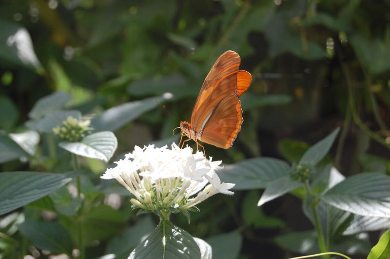 #butterfly Beauty In Nature Close-up Day Flower Insect Nature No People Outdoors Springtime EyeEmNewHere