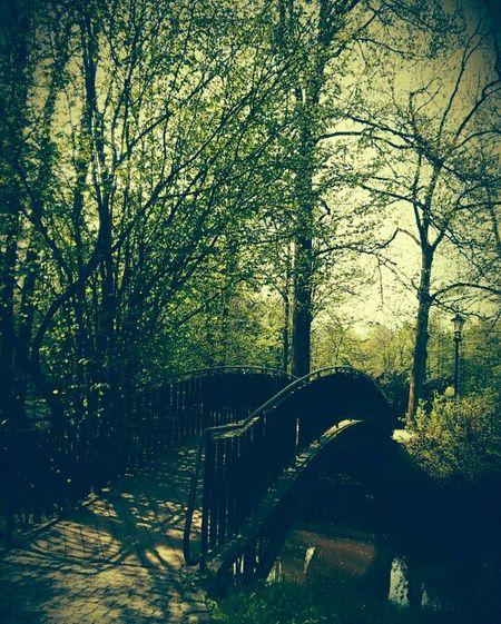 Poland Walking To School  Park Pszczyna Nature Trees Water Bridge EyeEm Nature Lover