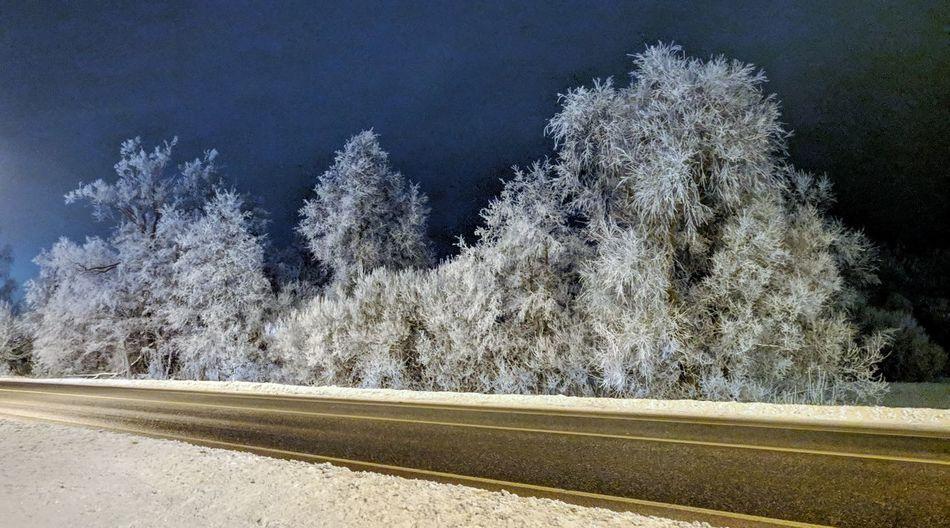Tree Road Snow