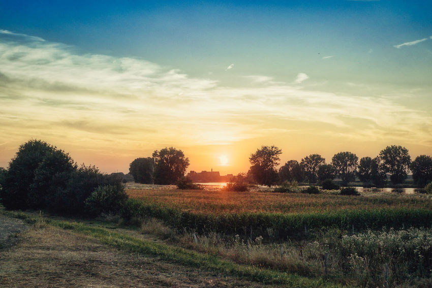 Sunset over the Maas near Grave on a summer evening Beauty In Nature Cloud - Sky Environment Field Grass Growth Land Landscape Nature No People Non-urban Scene Orange Color Outdoors Plant Rural Scene Scenics - Nature Sky Sun Sunset Tranquil Scene Tranquility Tree