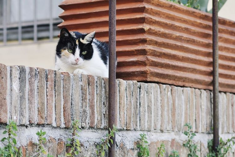 Portrait of a cat on a fence