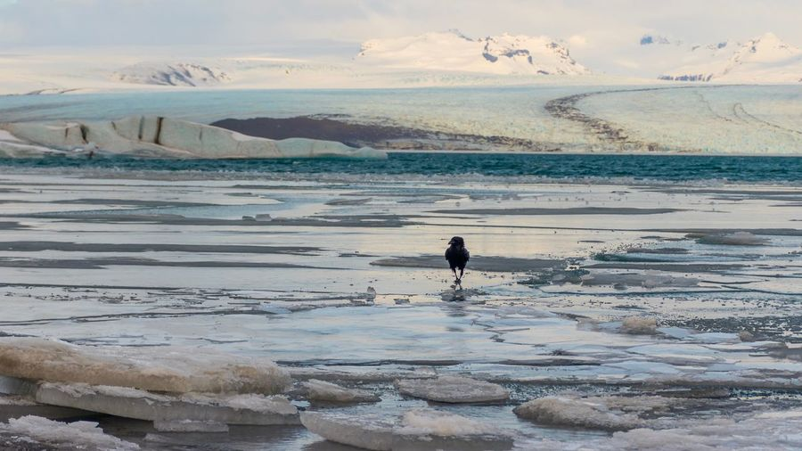 Rabe Krahe Jökulsárlón Gletschersee Water Beauty In Nature Sea Scenics - Nature Real People Beach Sky Nature Ice Cold Temperature Outdoors Day