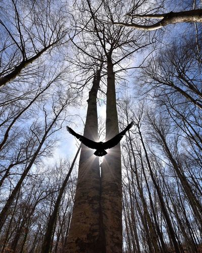 The signal Bird Faith Sun Forest Trees Light And Shadow Forest Photography Forestwalk Religion Blue Trees Silhouettes Nature Bare Tree Tranquility EyeEm Ready