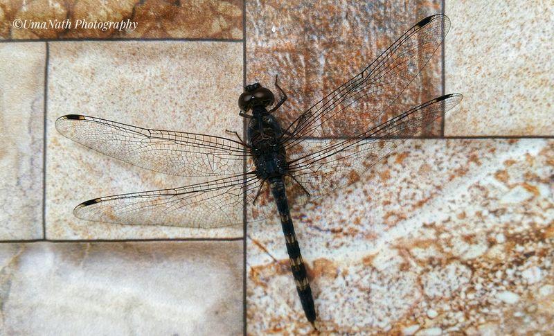 Dragonfly EyeEm Best Shots EyeEmNewHere EyeEm Nature Lover EyeEm Gallery Dragonfly Dragonfly💛 Dragonfly Insect Close-up Dragonfly Winged Animal Wing Animal Antenna