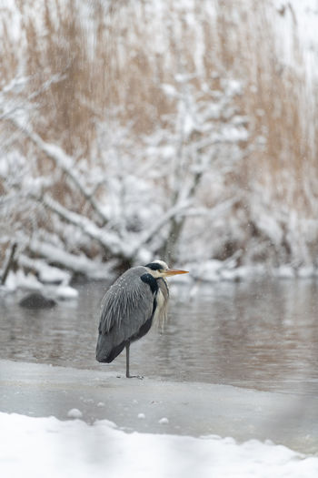 Bird on a snow