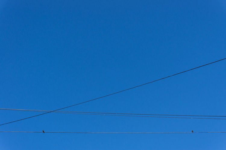 Birds Blue Cable Clear Sky Connection Electricity  Power Cable Power Line