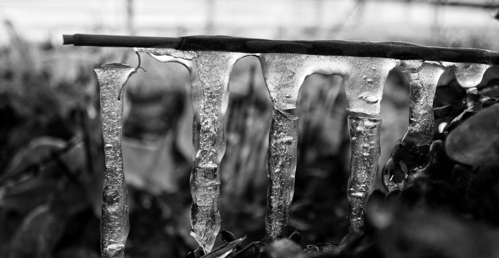 Close-up of icicles on metal fence