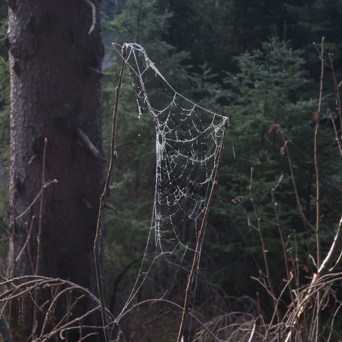 Close-up of spider web on tree trunk