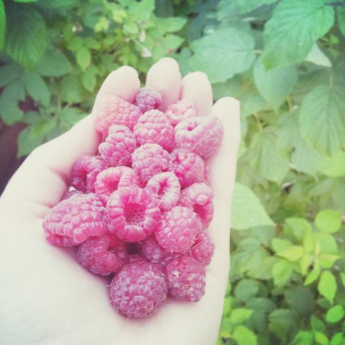 Picking them raspberries