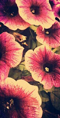 Taking Photos Dark Photography Flower Porn Flower Collection Maggie_Noir Black Magic