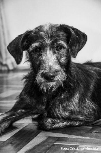 Black & White Black And White Blackandwhite Blackandwhite Photography Cachorro Cao Cãozinho Dog Dogs