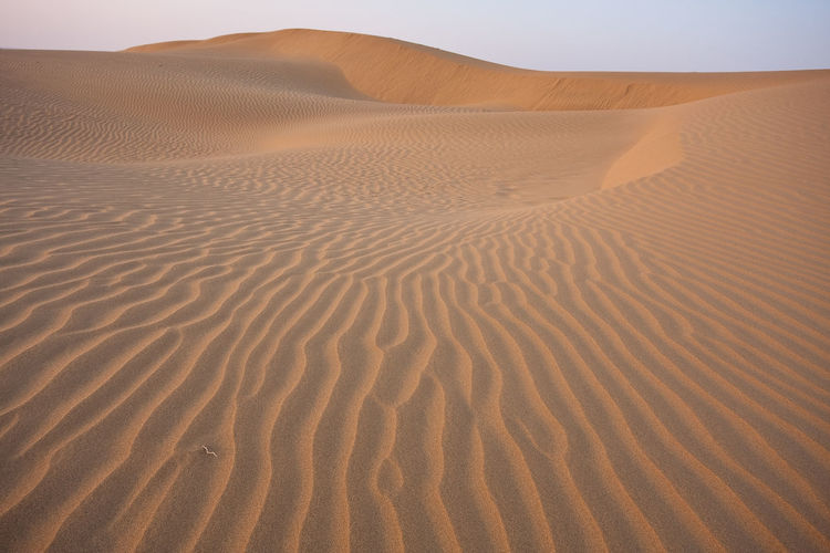 Desert Thar Desert Thar Desert Thar India Pakistan Camel Sand Dunes Hot Temperature Landscape Nature Travel Travel Destinations Indian Culture  Eye4photography  EyeEm Selects Canon Gettyimages Sand Dune Tranquility Tranquil Scene Scenics - Nature Arid Climate Beauty In Nature Rippled