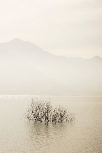 Horizon Over Water Outdoors No People Landscape Water Sky Tranquil Scene Beauty In Nature Tranquility Copy Space Minimalism Tranquility Nature Beauty In Nature Scenics Mountain Fog Day Lake Tree Sand Dune