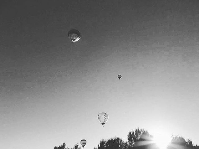 Mongolfiere al calar del sole Nuovafe_balloons Balloonsfestival Balloonsfestivalferrara Ig_ferrara Igersferrara Iger_ferrara Igersfe Myferrara Igers_emiliaromagna Emiliaromagna_friends Delphiinternational Turismoferrara Turismoer Vivoferrara Ferraracittadellebiciclette Follow4follow Like4like Instalike Instaferrara Mostrafe2015 Followmypic Photomypassion Nuovafe_biancoenero