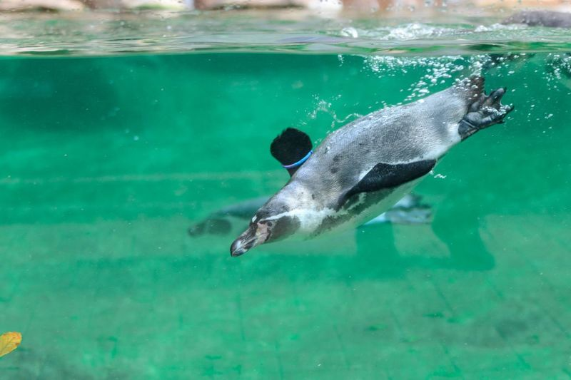 Water Swimming Sea Underwater Animal Animal Themes One Animal Nature Penguin