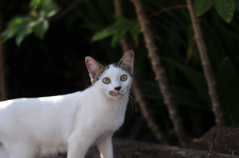 Portrait of white cat on plant