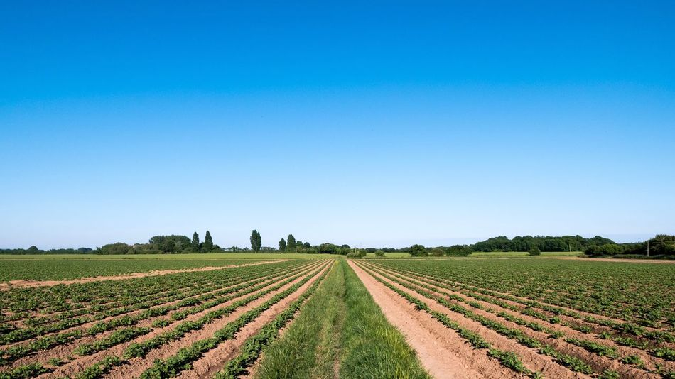 Agriculture Field Rural Scene Copy Space Clear Sky Landscape Tranquil Scene Blue Tranquility Nature Beauty In Nature Farm Growth Scenics Day Plough No People Outdoors Plowed Field Sky Potatoes