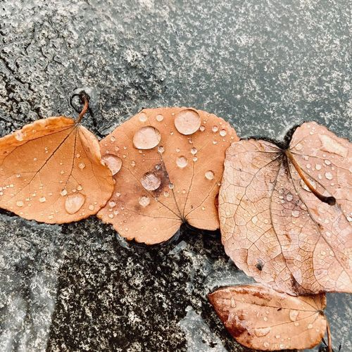 High angle view of wet dry leaves during rainy season