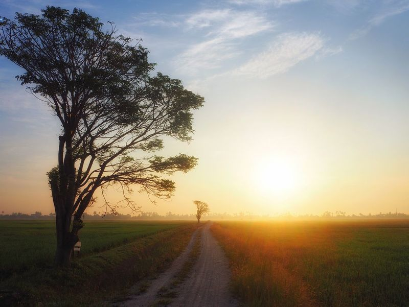 Majestic view of sunrise in remote area. Meadow Sunrise Sunrise_Collection Sunrise N Sunsets Worldwide  Nature Nature_collection Nature Photography Landscape Photography Skyscape Road Empty Road Rural Scene Rural Scene Sunset Field Rural Scene Nature Agriculture Landscape The Way Forward Tree Outdoors Sky No People Scenics Road Grass Beauty In Nature Day Freshness