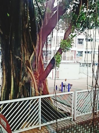 Relaxing under the Tree Tree Railing Building Exterior Solitude Old Man Sitting Exercising people and places