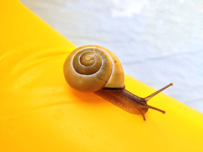 Snail Animals In The Wild Close-up Day Fragility Nature One Animal Slimy Snail Spiral Wildlife Yellow