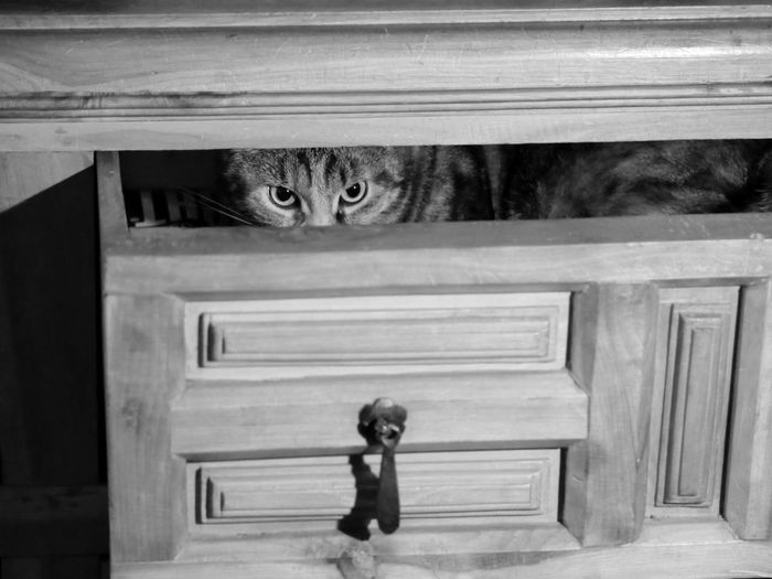 Portrait of tabby hiding in drawer of cabinet