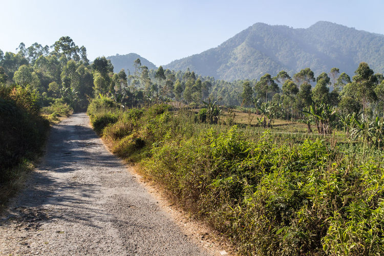 Road amidst trees and mountains against clear sky