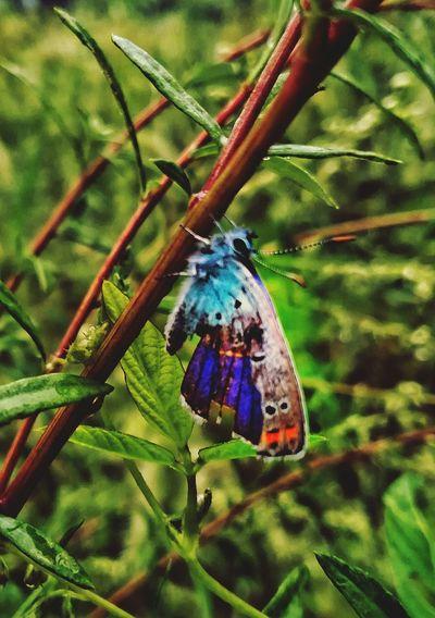 雨后一只残了翅膀的蝴蝶。 First Eyeem Photo