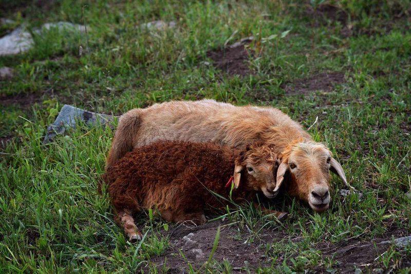 新疆,喀纳斯,徒步。 Mammal Outdoors Animal Themes Nature First Eyeem Photo